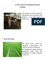 Agriculture is the Culprit for Global Climate