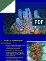 Chapt12 Porifera Final