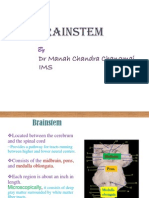 anatomyofbrainstem-100612052032-phpapp01