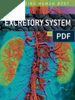 Excretory System the Amazing Human Body