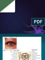 Nervul Optic ABe