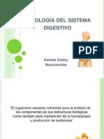 Fisiología del sistema digestivo