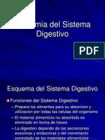 anatomiadelsistemadigestivo-ppt3-100819115734-phpapp01