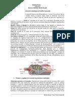 Medicina - Fisiología. Placa Neuromuscular