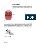 Difteri Tonsil
