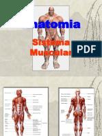 77238809 Anatomia Sistema Muscular