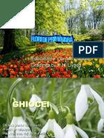4florideprimavara-130702034429-phpapp01