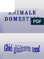 0_animale_domestice