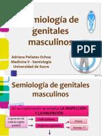 Semiologia Del Aparato Reproductor Masc. y Renal