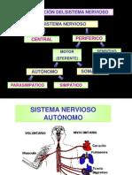 Medicina - Fisiologia. Sistema Nervioso Autonomo