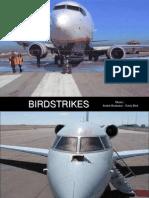 Avioane Si Pasari