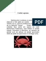 Crabul capsuna