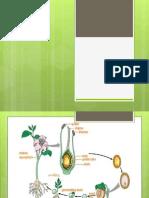 fertilisation in plants
