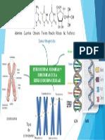 estructura quimica de la reproduccion celular.pptx