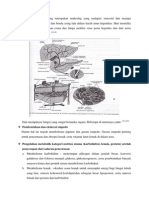 Sel Kupffer Yang Merupakan Makrofag Yang Melapisi Sinusoid Dan Mampu Memfagositosis Bakteri Dan Benda Asing Lain Dalam Darah Sinus Hepatikus