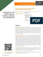 PHB production in Azomonas, Acinteobacter and Bacillus species