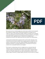5 plantas curativas