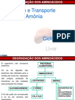 2º Bim- Metabolismo dos Aminoacidos