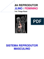 Aula Sistema Reprodutor Atual