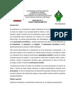 Tejido Parénquimatico Pract. 2