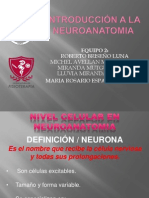 INTRODUCCION A LA NEUROANATOMIA.pptx