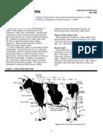 Judging Dairy Cattle