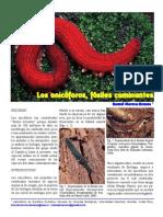 2012 LosOnicoforosFosiles v3 SV