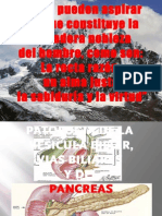 03 PAT.VESÍCULA BILIAR Y PANCREAS