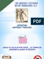 Anatomia y Fisiologia Uci