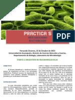 Pruebas Bioquímicas Microbiología