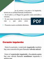 APARATO CIRCULATORIO Globulos rojos