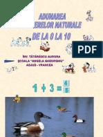 adunare_0_10