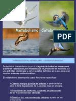 METABOLISMO y CATABOLISMO