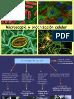 MICROSCOPIA y ORGANIZACION CELULAR