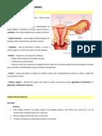 Ficha Informativa - Sistema Reprodutor Feminino