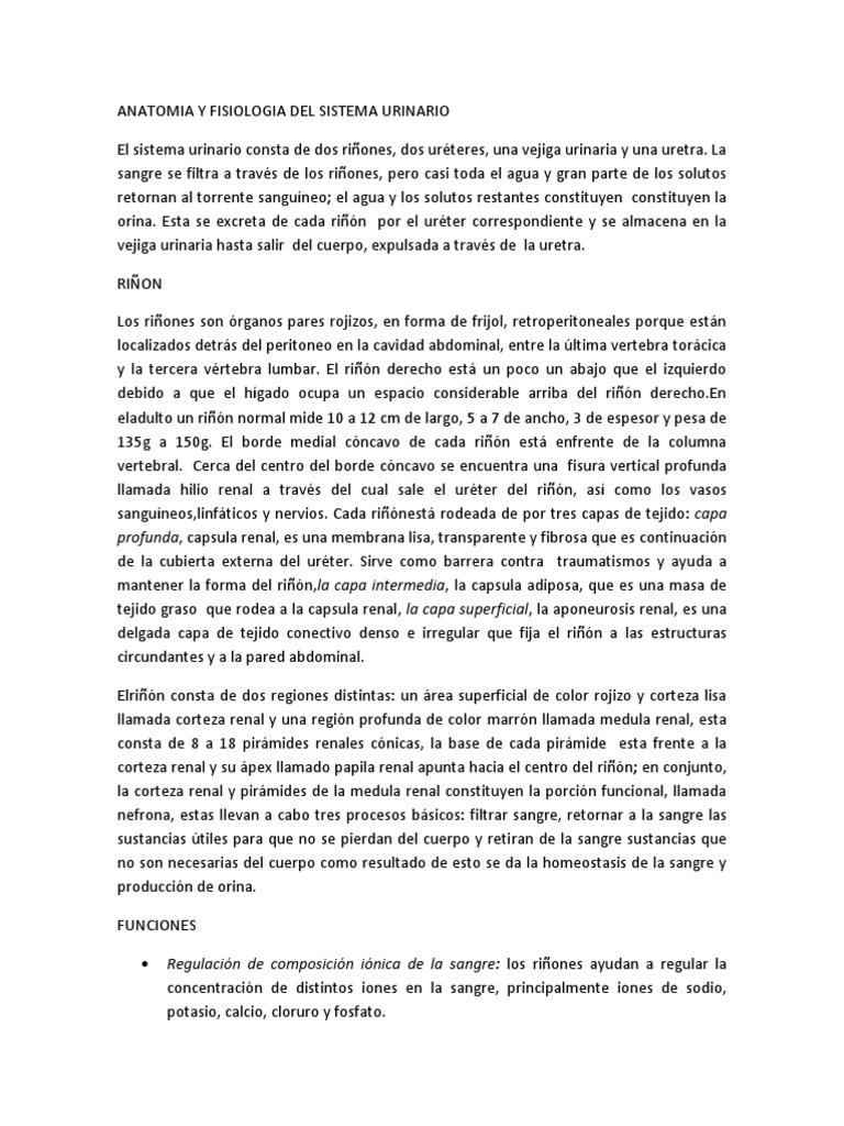 Anatomia y Fisiologia Del Sistema Urinario