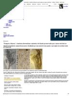 'Pompeia chinesa'_ cientistas desvendam o mistério de fósseis preservados por cinzas vulcânicas - Ciência - Notícia - VEJA