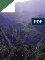 Rainforest Madagascar 04
