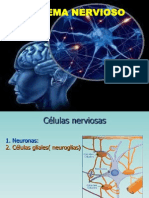 Organizacion Del Sistema Nervioso