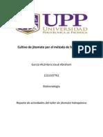 Cultivo de jitomate por el método de hidroponía..docx