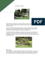 Cómo instalar y decorar un estanque en el jardín