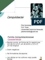 Campylobacter PG CYTA