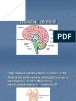 Trunchiul Cerebral