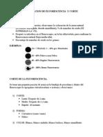 Evaluacion de Fluorescencia y Corte