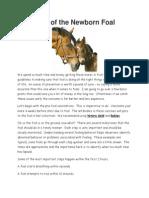 Care of the Newborn Foal