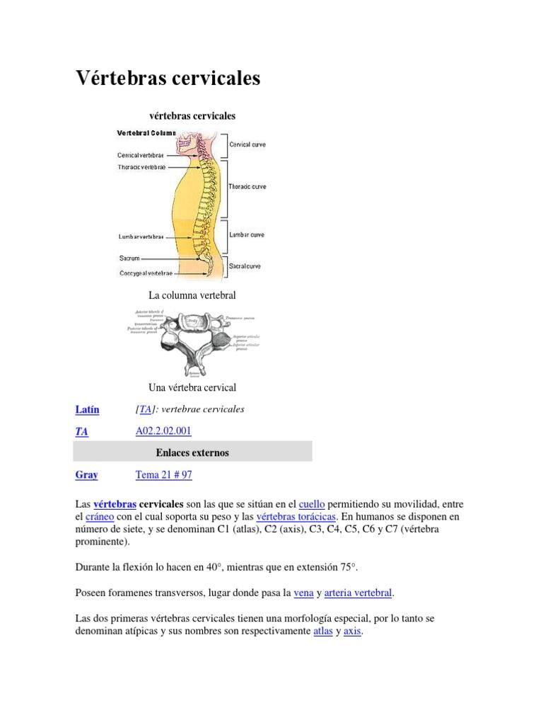 Vértebras cervicales.docx