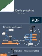 Digestión de proteínas.pptx
