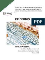 03 - Epidermis.docx