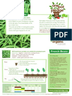 French Beans - Organic Growing Guides for Teachers + Students + Schools