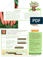 Carrots - Organic Growing Guides for Teachers + Students + Schools